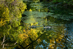 城市公园在北达科他 免版税图库摄影