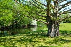 城市公园在博伊西,爱达荷 库存照片