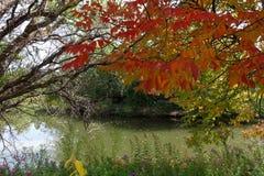 城市公园在博伊西,爱达荷 免版税库存照片