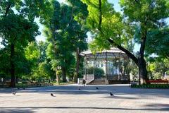 城市公园在夏天、明亮的被日光照射了,绿色树和阴影 库存照片