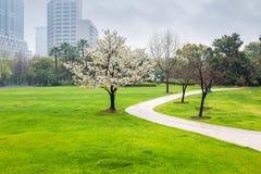 城市公园在春天 免版税库存图片