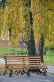 城市公园在秋天 与停留在桦树下的金属装饰的好的长木凳 库存照片