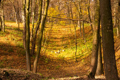 城市公园在秋天 库存照片