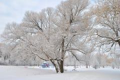 城市公园在降雪以后的冬天 免版税库存图片