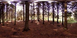 城市公园度假区的UHD 4K 360 VR虚拟现实 树和绿草秋天或夏日 股票录像