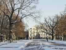 城市公园橡木胡同冬天下午 库存图片