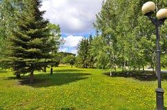 城市公园看法草坪用蒲公英 库存图片
