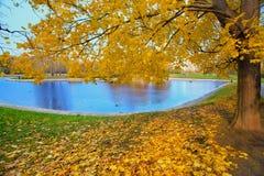 城市公园秋天风景有金黄树和池塘的 库存照片
