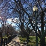 城市公园边路和光秃的分支在冬天 库存照片