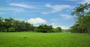 城市公园绿色草坪  免版税图库摄影