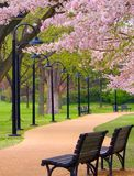 城市公园 库存图片