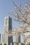 日本,横滨市和佐仓 免版税库存图片