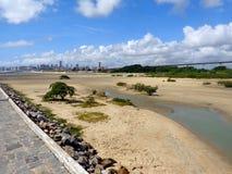 城市地平线和美洲红树 库存照片