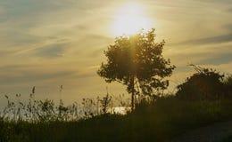 城市塔林看法从波罗的海的 免版税库存照片