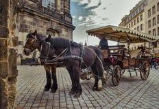 城市德累斯顿德国萨克森 一个对马被利用对推车 库存图片