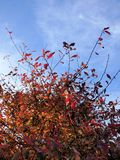 城市日框架留下槭树公园星期日 免版税库存照片