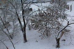 城市有来临冬天 街道用白色雪厚实的层数盖 在雪的树,雪花在天空中飞行 免版税库存照片