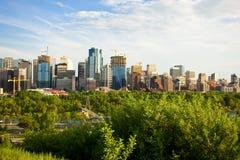 城市森林 免版税库存图片