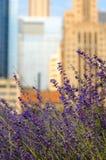 城市淡紫色公园 库存照片