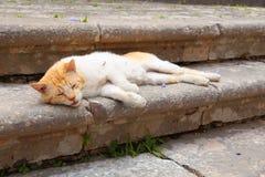 城市猫在希腊 库存照片