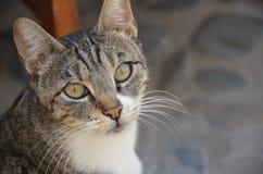 城市猫 免版税图库摄影