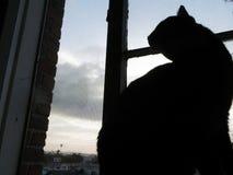 城市猫 库存照片