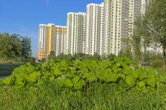 城市的住宅区的类型 免版税库存照片