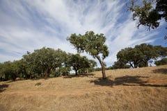 城市的公园,欧罗巴葡萄牙 库存照片