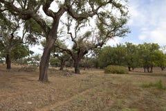城市的公园,欧罗巴葡萄牙 免版税库存照片