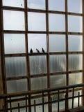 从城市的高度的看法通过原鸽的眼睛 免版税库存图片