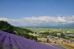 城市看法和淡紫色在小山调遣 库存图片