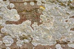 城市石纹理J 库存图片