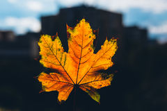 城市秋天叶子 免版税图库摄影