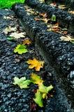 城市秋天在公园-下落的槭树在石楼梯离开 库存照片