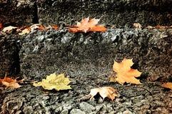 城市秋天风景-下落的槭树在石楼梯离开 库存照片