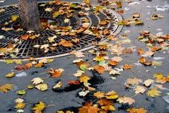 城市秋天 免版税图库摄影