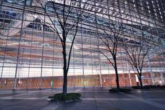 城市结构树 免版税库存图片
