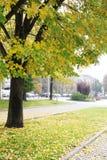 城市街道在秋天 免版税库存照片