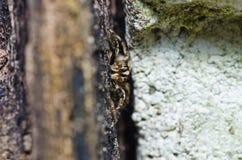 城市跳的蜘蛛 库存照片