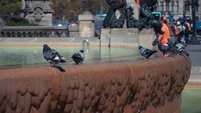 城市鸠在喷泉沐浴在巴塞罗那 股票录像