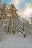 2006年城市12月新西伯利亚公园西伯利亚暴风雪 免版税库存图片
