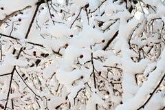 2006年城市12月新西伯利亚公园西伯利亚暴风雪 库存照片