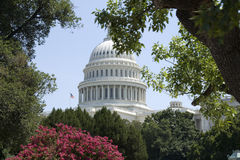 城市dc结构树华盛顿 免版税库存图片