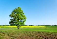 域一结构树 库存图片