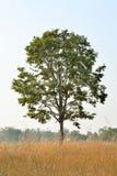 域一结构树 图库摄影