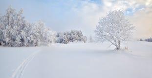域偏僻的太阳结构树冬天 免版税库存图片