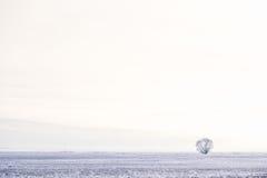 域偏僻的结构树冬天 免版税图库摄影