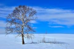 域冻结的结构树冬天 库存图片