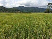 域北部米泰国 库存照片