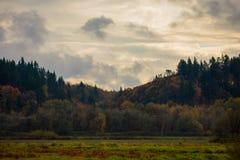 域和森林 免版税库存图片